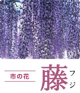市の木:藤